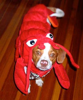 lobster_1731280977_714caa2675_o
